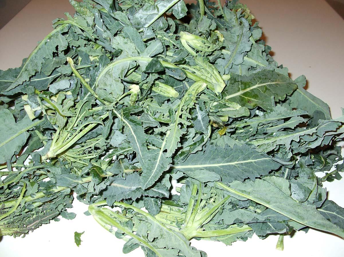 Broccolo fiolaro (originario di Creazzo): scheda tecnica di coltivazione