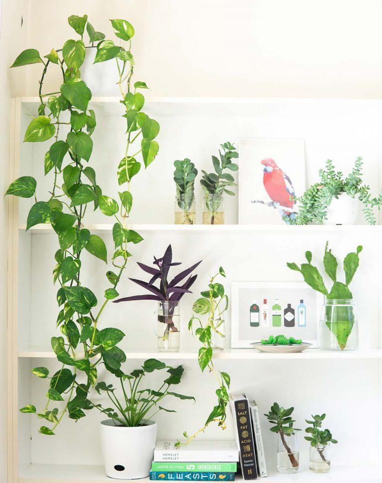 coltivare piante indoor
