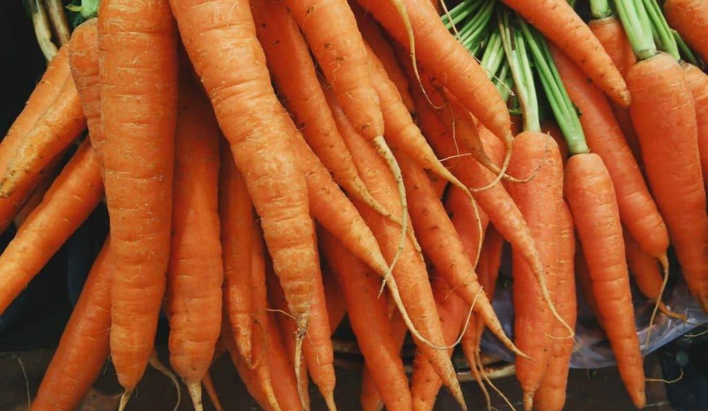 coltivazione carote