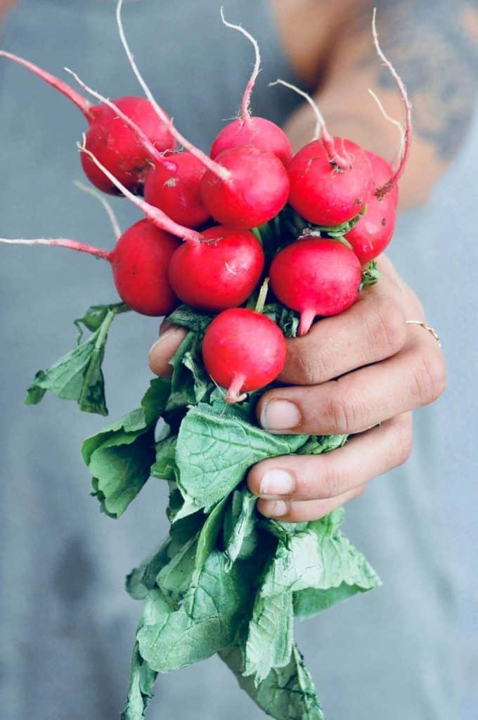 coltivazione ravanelli rapanelli