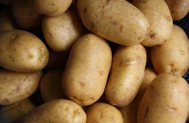 semina patate