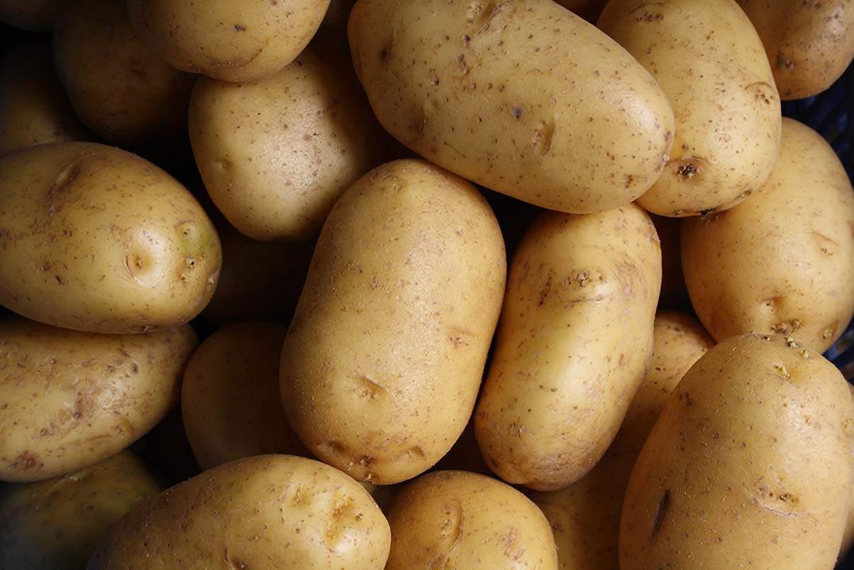 Coltivazione delle patate: tecniche e consigli