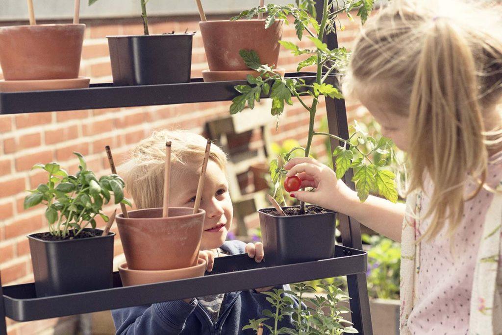 sprout matita da piantare