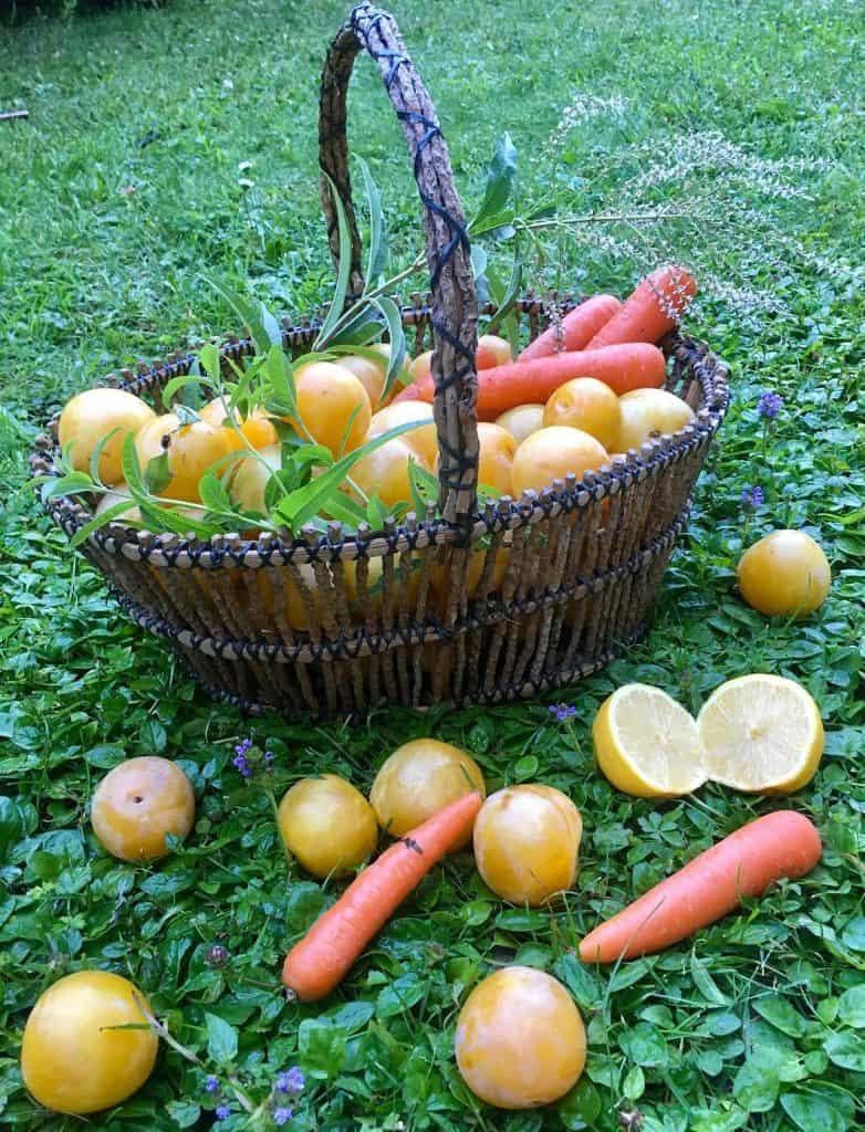 susine gialle limoni carote erba cedrina